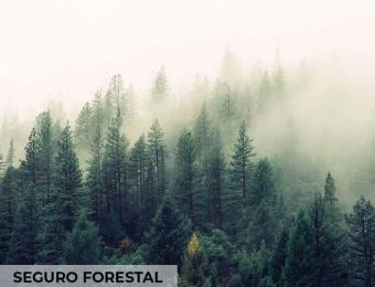 Seguro Forestal